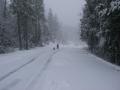 snowpatrol007
