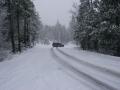 snowpatrol019