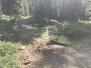 2017-07-23 Strawberry Trail Patrol Run
